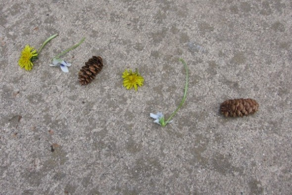 nature-patterns.jpg